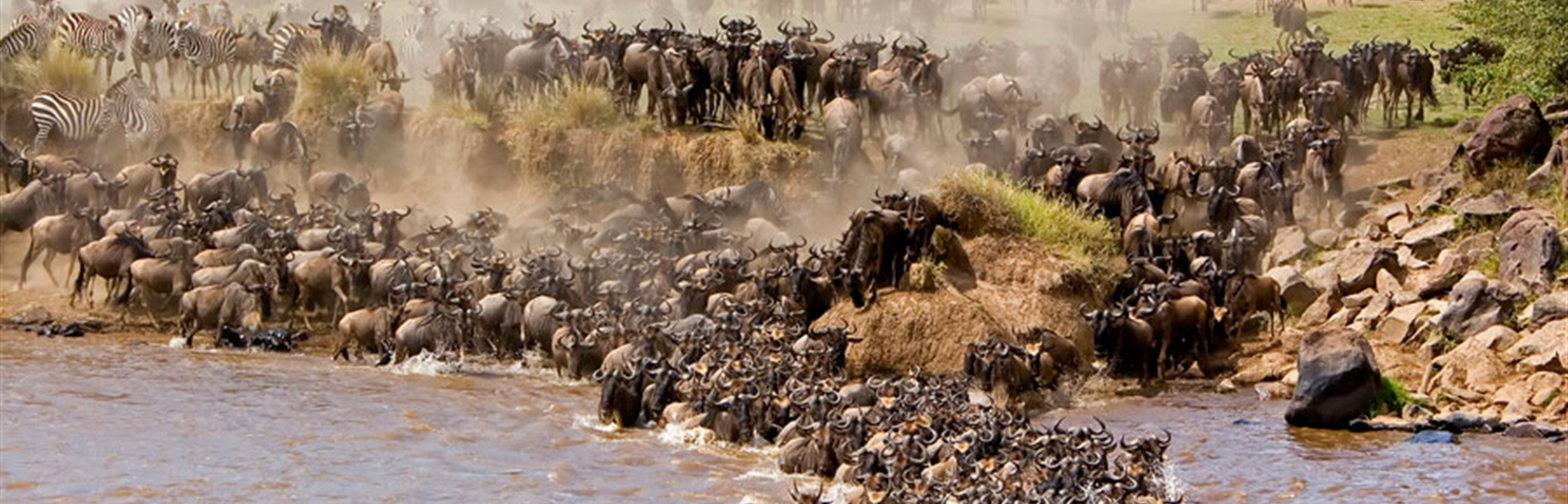 The Wild Migration in Maasai Mara National Reserve In Kenya