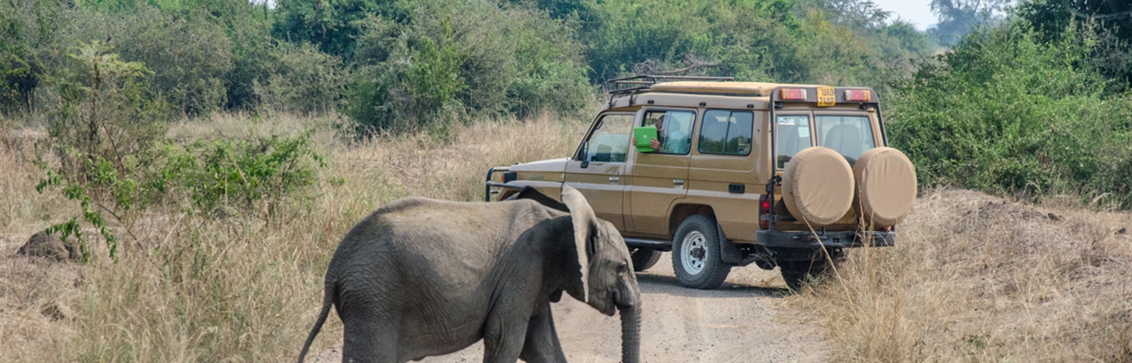 Ultimate East African Game Drive to Reflect