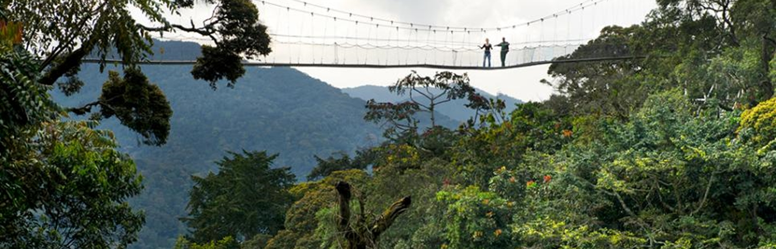 Canopy Walk in Nyungwe Forest National Park Rwanda