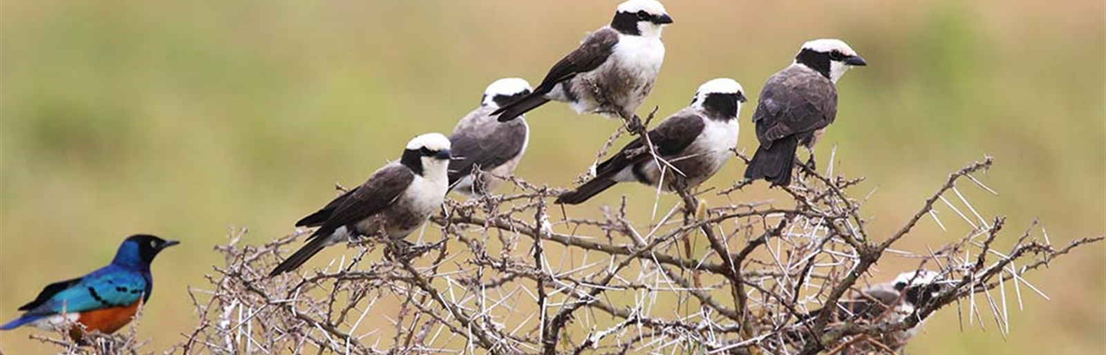 Lively Birding Adventure in the East African National Parks